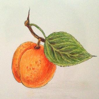Aprikosensenf